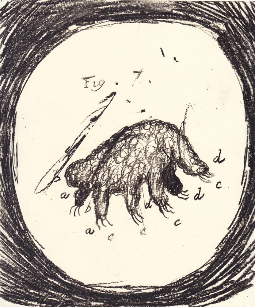 tardigrade_02_small