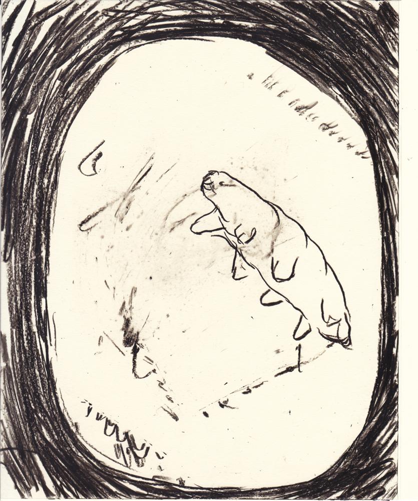 tardigrade_05_small
